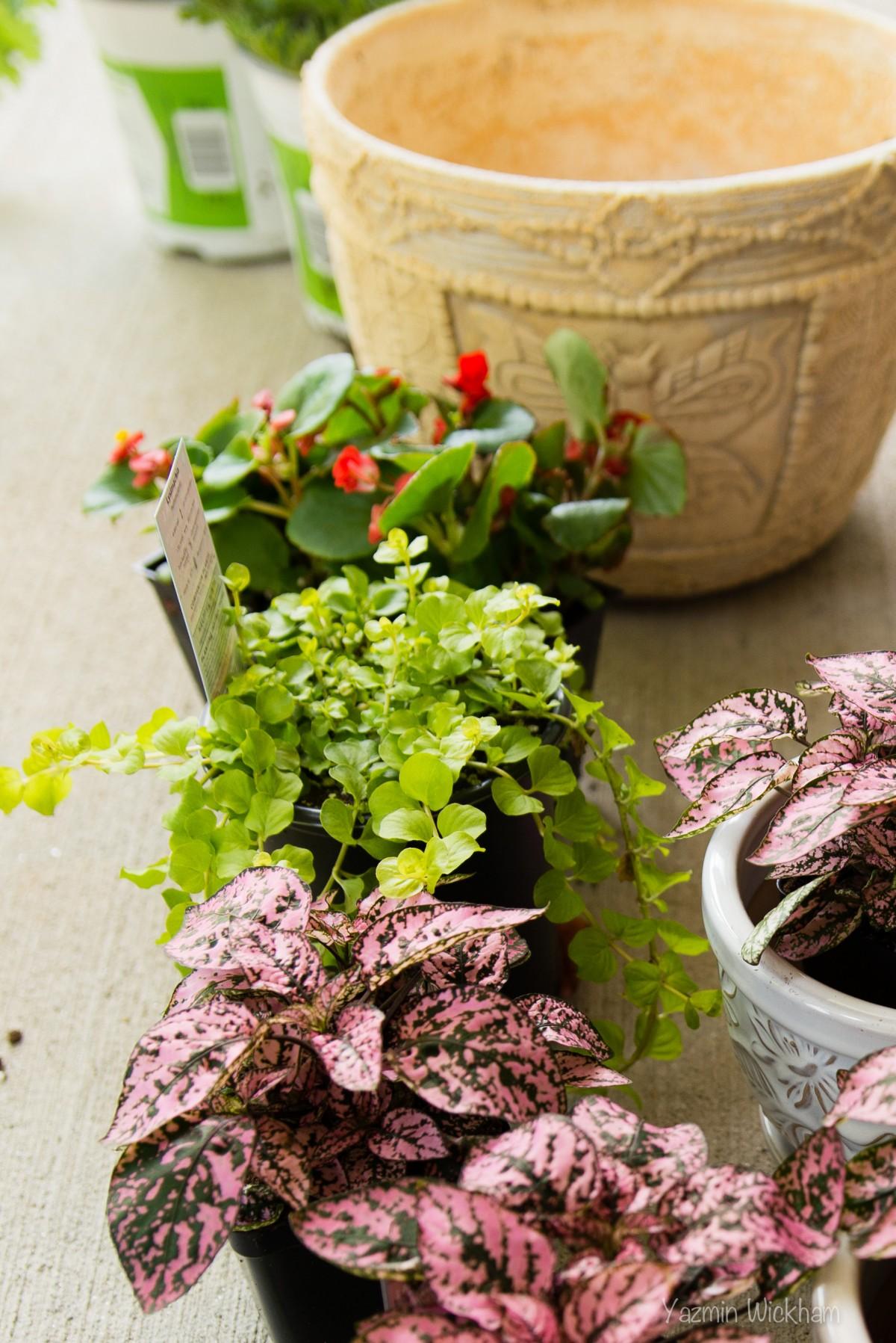 {137/365} Gardening