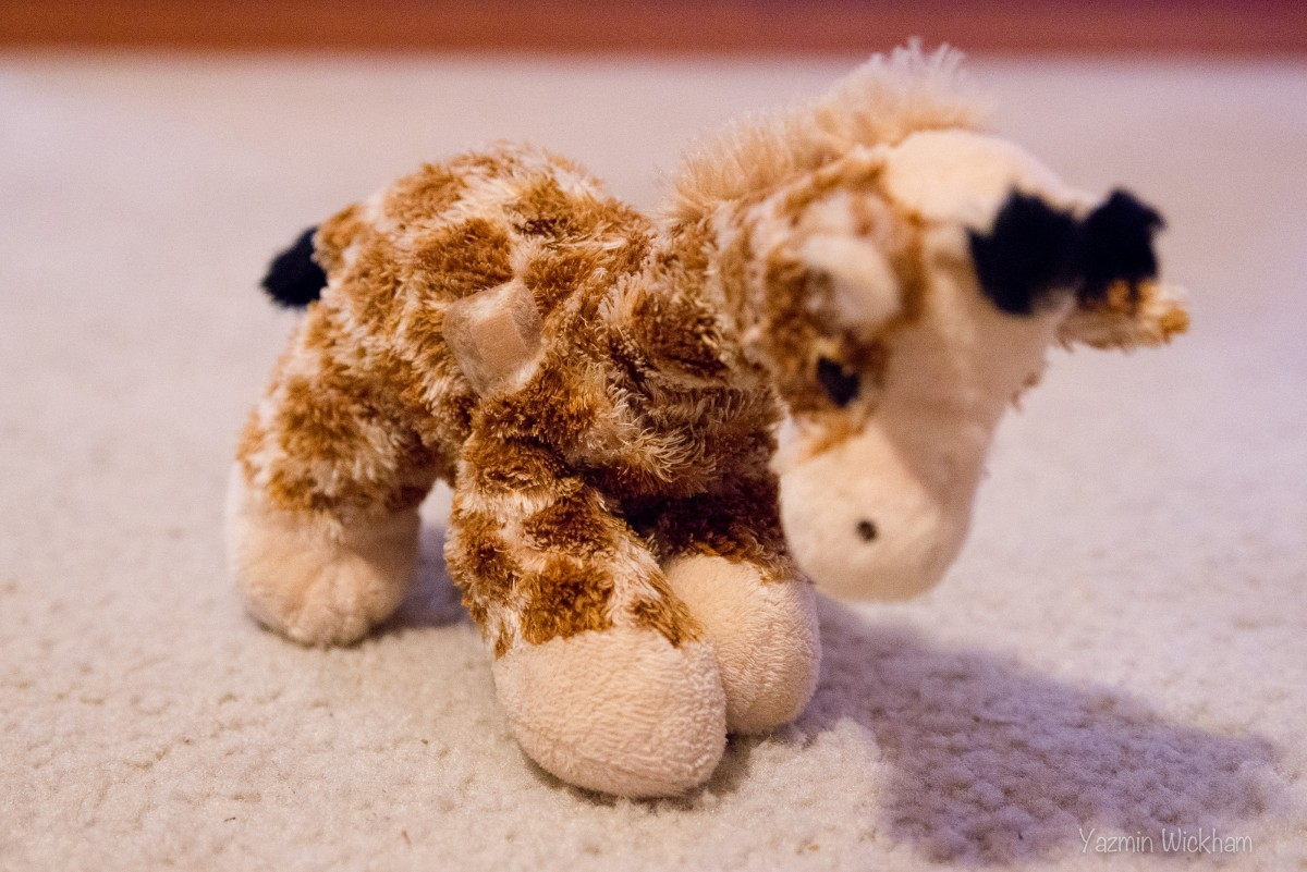{141/365} Giraffe has a boo-boo