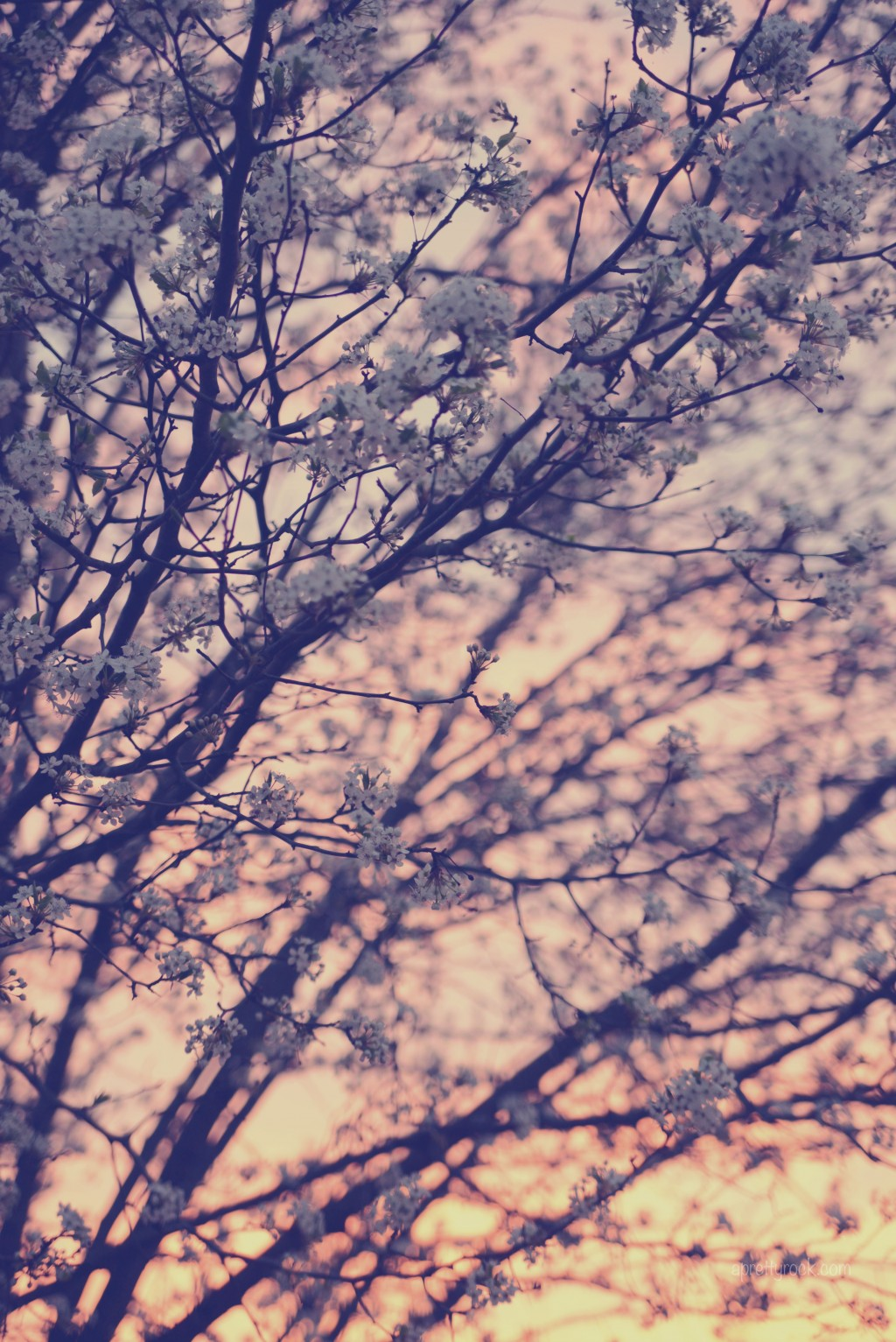 {76/365} Beautiful blooms. Beautiful sunset.